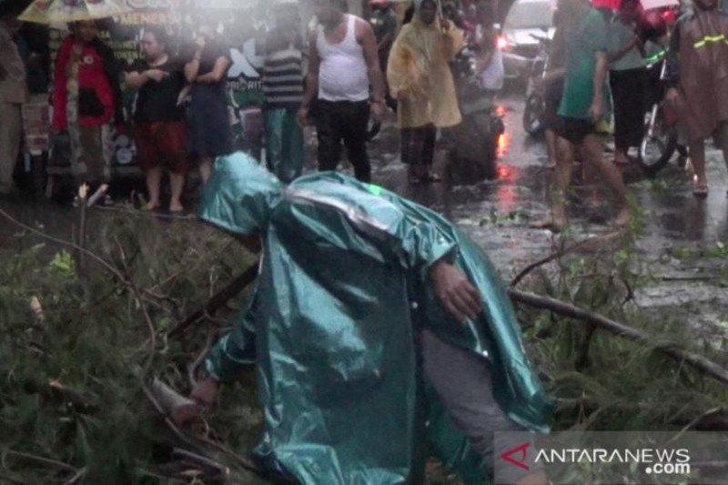 Nahas! Seorang pengedara motor tewas tertimpa pohon tumbang