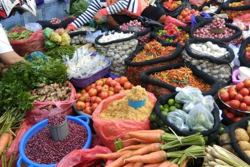 Pemkab Tanatoraja dorong petani milenial kembangkan hortikultura