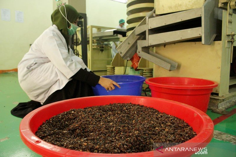 Pelatihan pengelolahan biji kakao menjadi cokelat