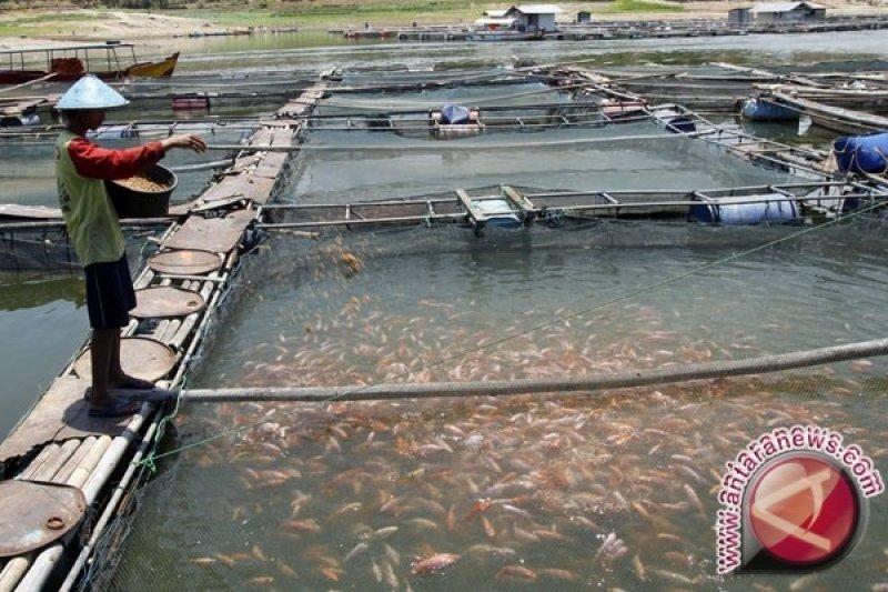 Pembudidaya ikan di Kulon Progo kesulitan memasarkan hasil panen