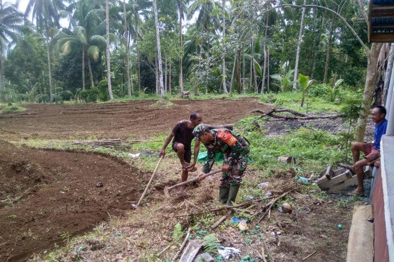TNI di Sangihe bantu warga olah lahan pertanian