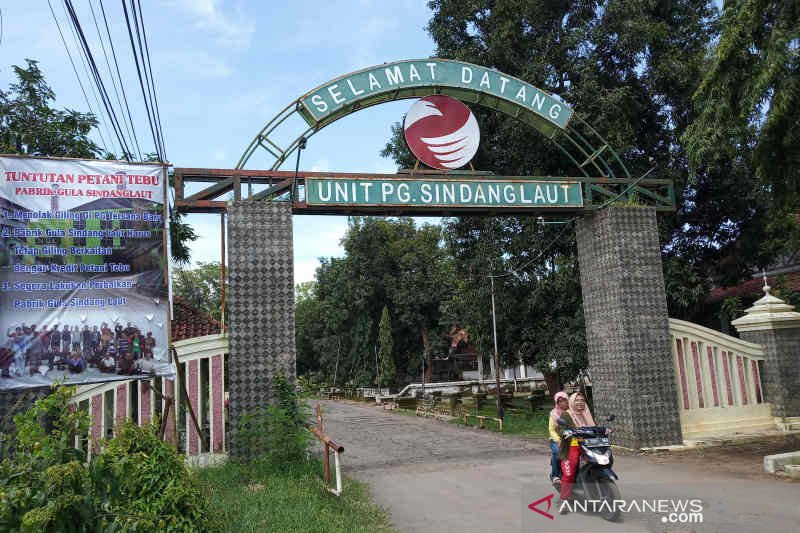 Lahan kebun tebu di wilayah PG Sindanglaut Cirebon terus menyusut