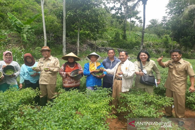 Petani Gunung Kidul mulai beralih tanam cabai rawit hijau