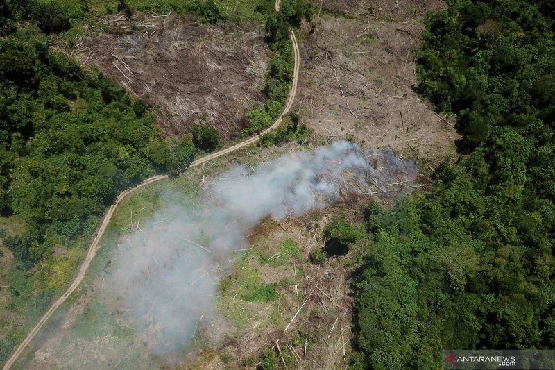 Tutupan hutan berkurang 462.400 Ha pada 2019 akibat konversi lahan-karhutla
