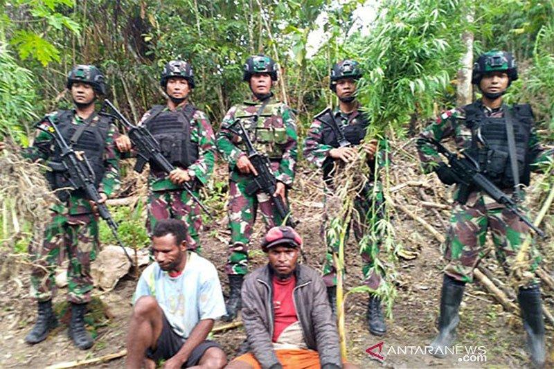 Satuan tugas pengamanan perbatasan RI-PNG amankan ladang ganja