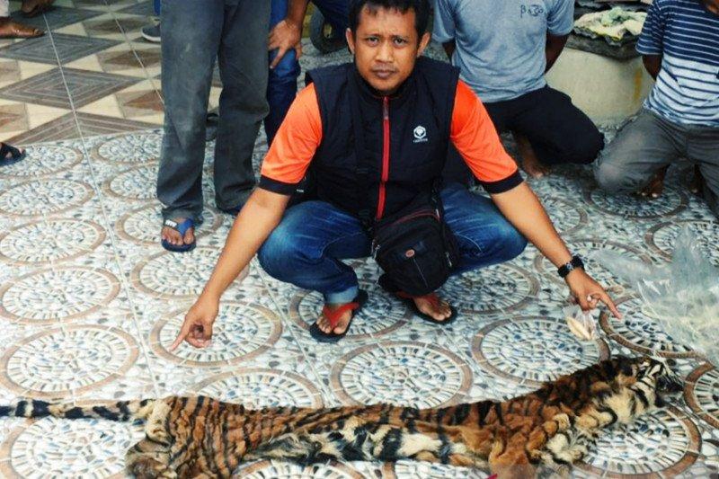 Polisi bongkar sindikat perdagangan organ harimau sumatera