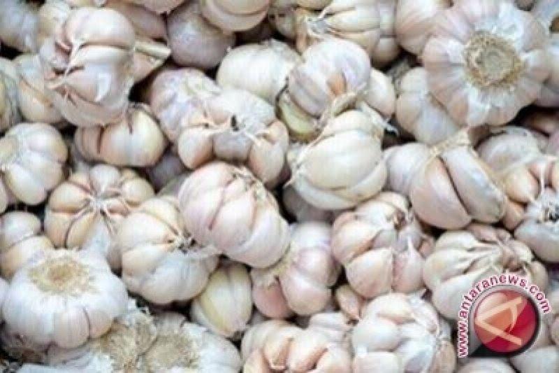 Harga bawang putih di Yogyakarta berangsur turun