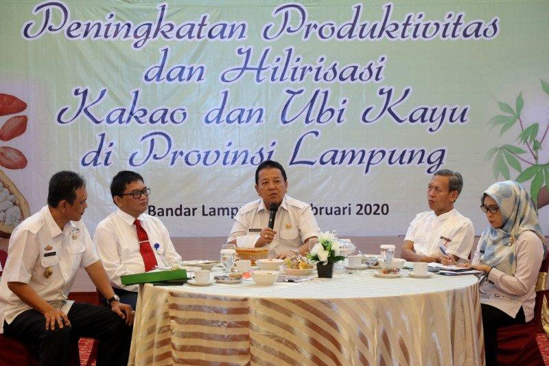Produksi ubi kayu Lampung bisa di atas 25 ton per hektare