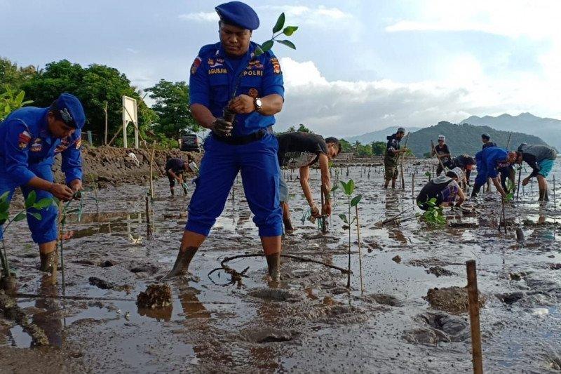 500 bibit mangrove ditanam Polairud Polres Bima