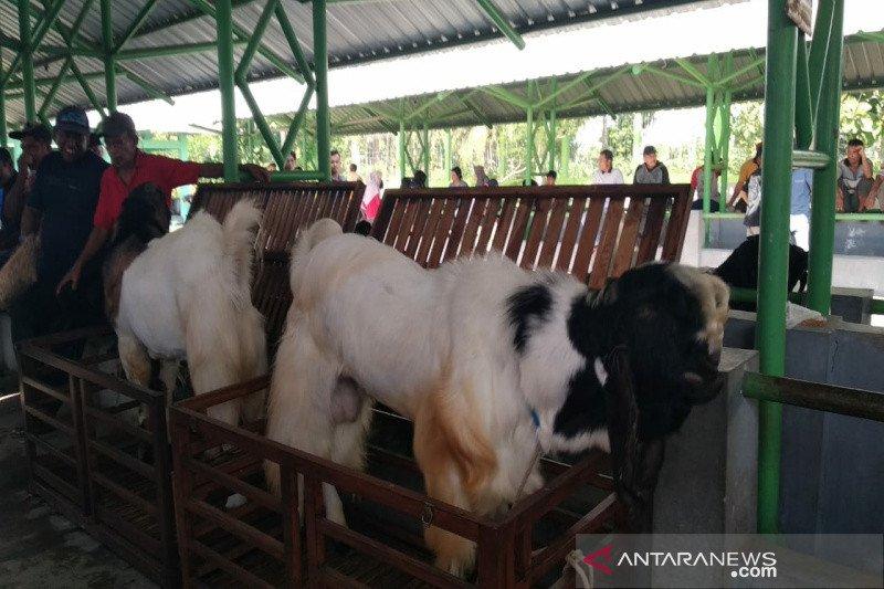 """Kulon Progo menggandeng Paguyuban """"Konco Ngarit"""" geliatkan Kambing PE"""