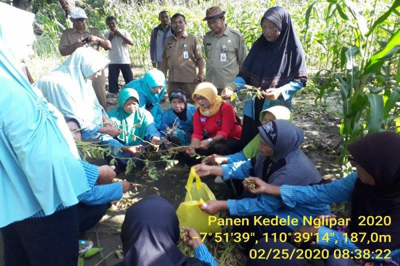Kelompok Wanita Tani Lestari Gunung Kidul panen kedelai