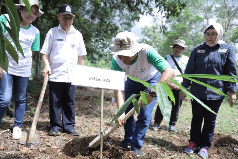 UGM tanam ribuan bambu di Wanagama
