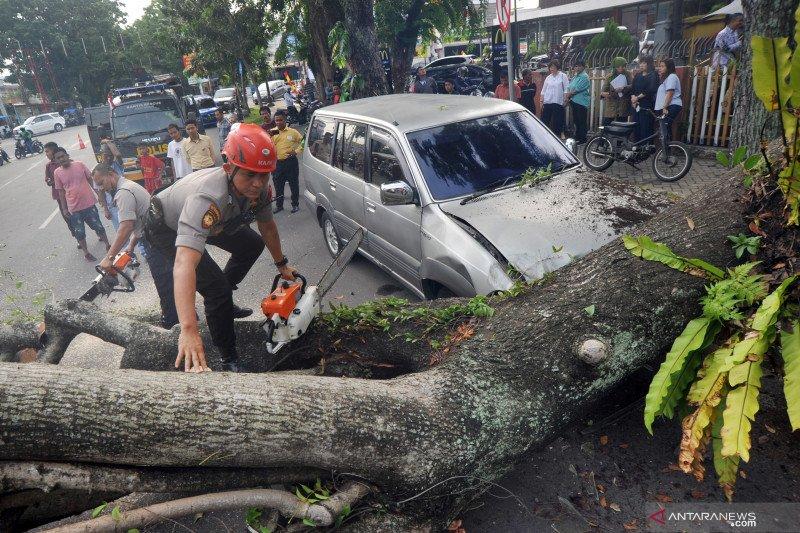 Hujan angin di Sleman mengakibatkan puluhan pohon tumbang