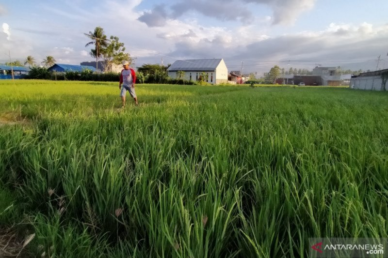 Pemprov Sulteng dorong penerbitan Perda pertanian berkelanjutan