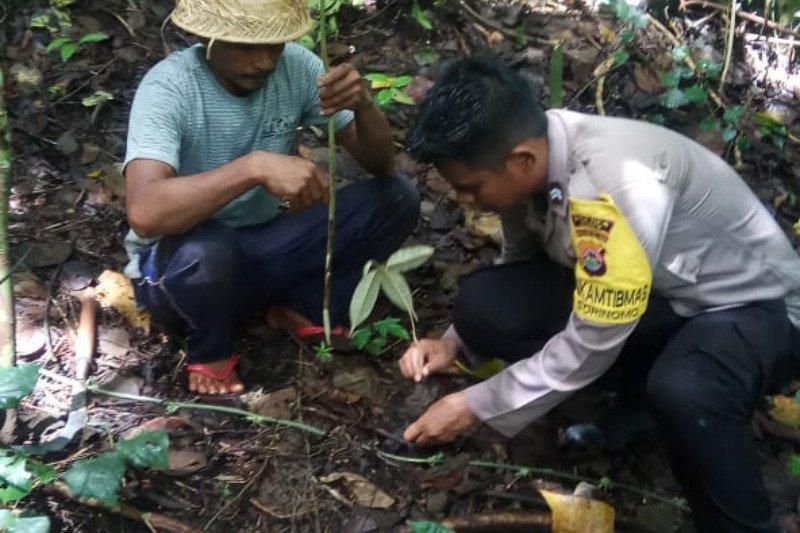 Pemda, TNI dan Polri di Dompu tanam pohon di sekitar mata air