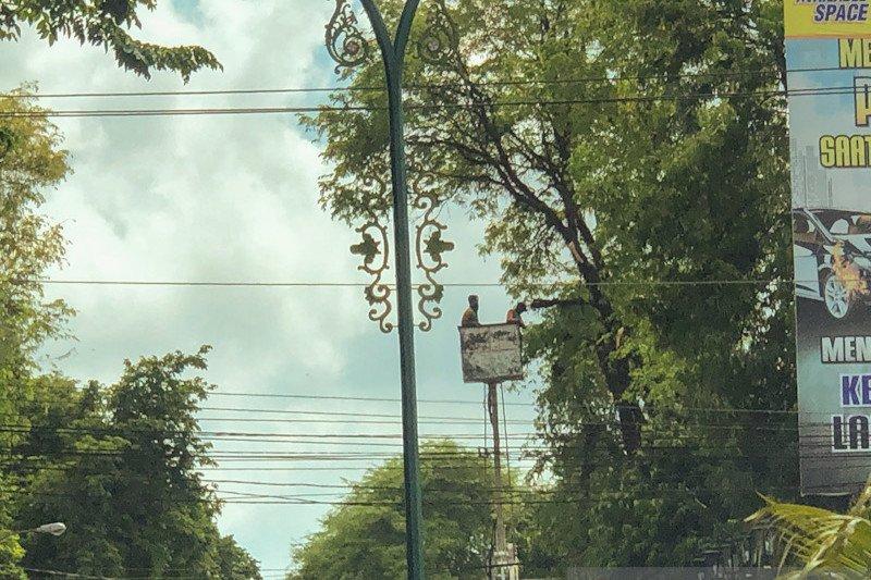DLH Yogyakarta mengingatkan rutin cek kondisi pohon antisipasi tumbang