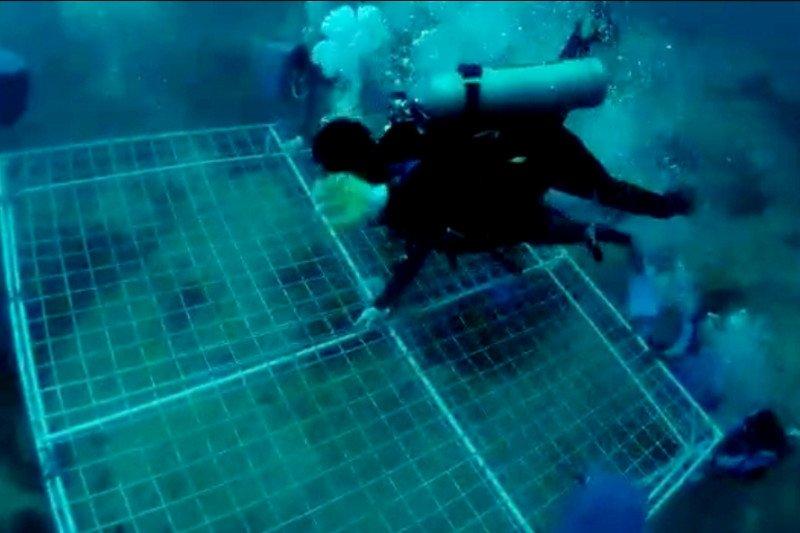 """Tim penyelam turunkan 36 media koral transplantasi """"Garuda Di Lautku"""""""