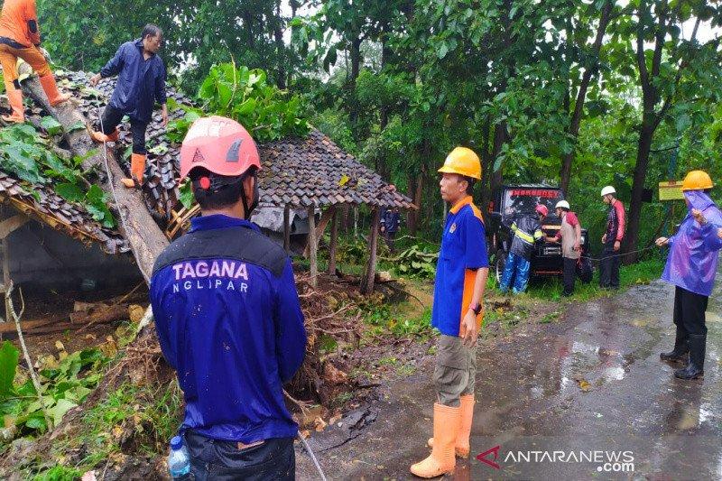 Gunung Kidul imbau masyarakat waspadai potensi pohon tumbang