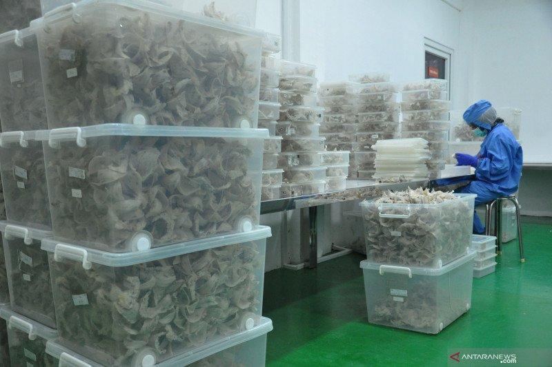 Ekspor sarang burung walet bisa meningkat didukung regulasi
