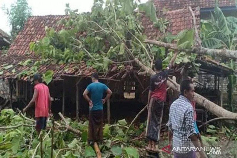 52 rumah rusak tertimpa pohon tumbang di Bantul