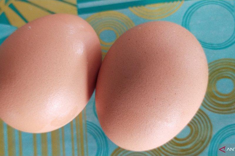 Harga telur naik di Mesuji