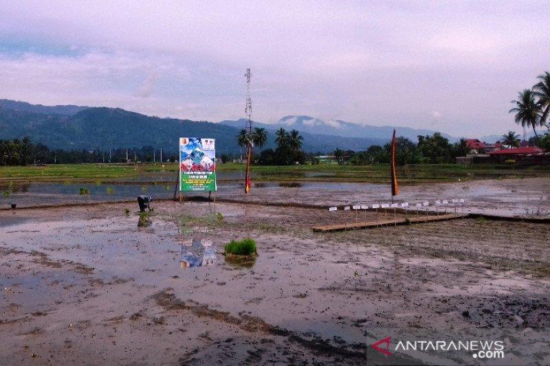 Target tanam padi Kota Solok pada 2020 menyusut