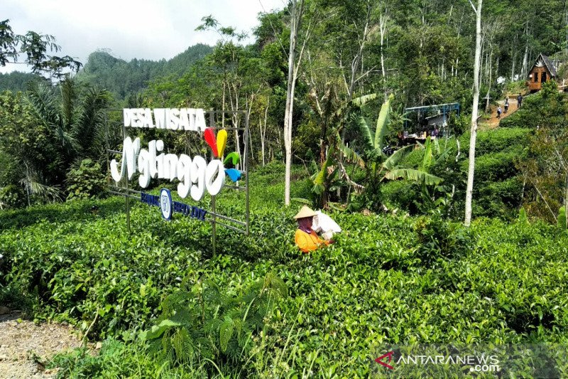 Lima objek wisata berbasis masyarakat di Kulon Progo sudah ditutup