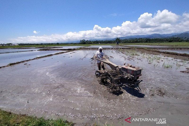 Tahun ini, Parigi Moutong targetkan produksi padi ladang 909 ton