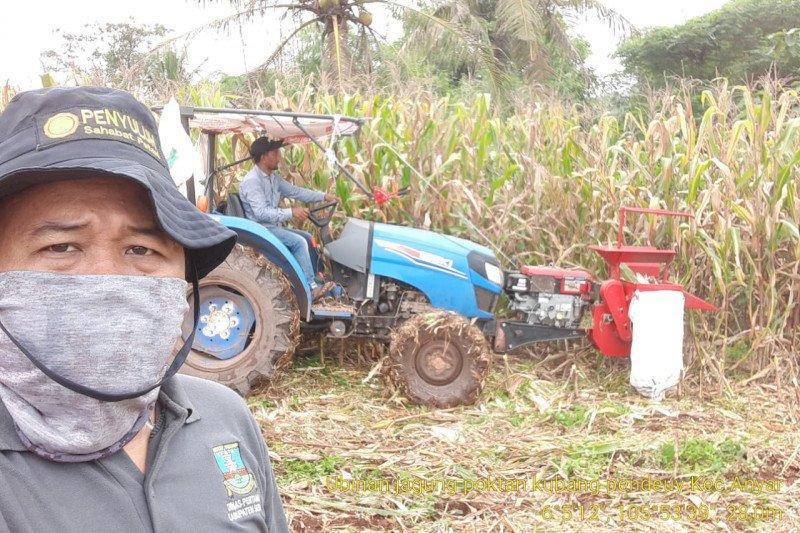 Petani Banten memasuki musim panen raya padi