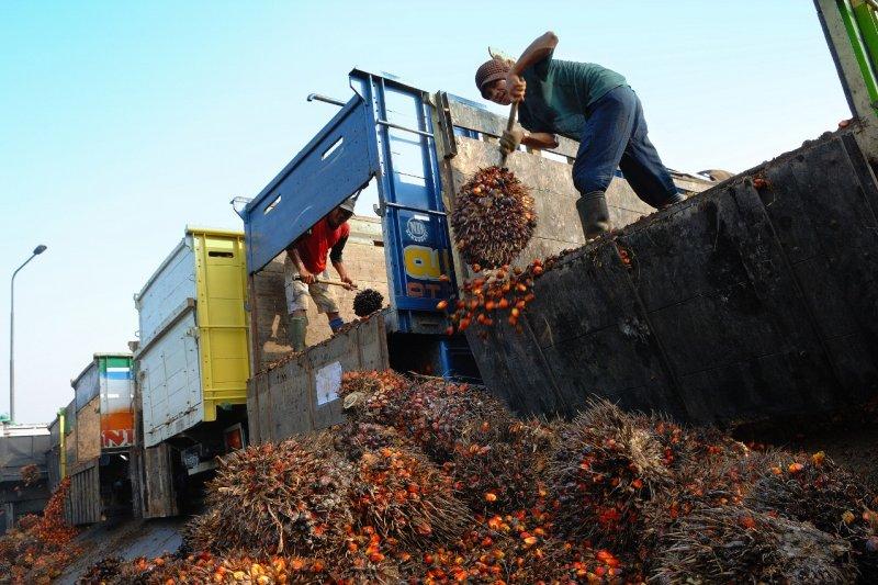 PTPN VIII konversi lahan karet menjadi kebun sawit