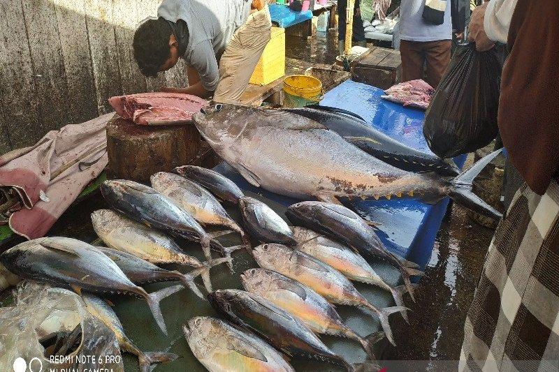 Aktivitas jual beli ikan TPI Hamadi Jayapura tidak terpengaruh COVID-19