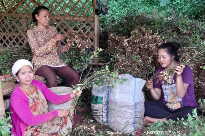 Kelompok tani hutan Bogor panen empon-empon
