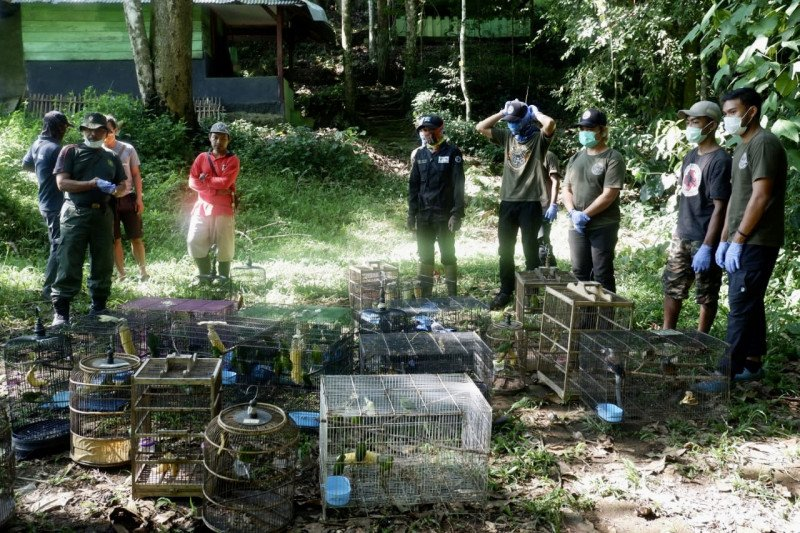 BKSDA Bengkulu lepasliarkan 56 ekor burung dilindungi di TNBBS