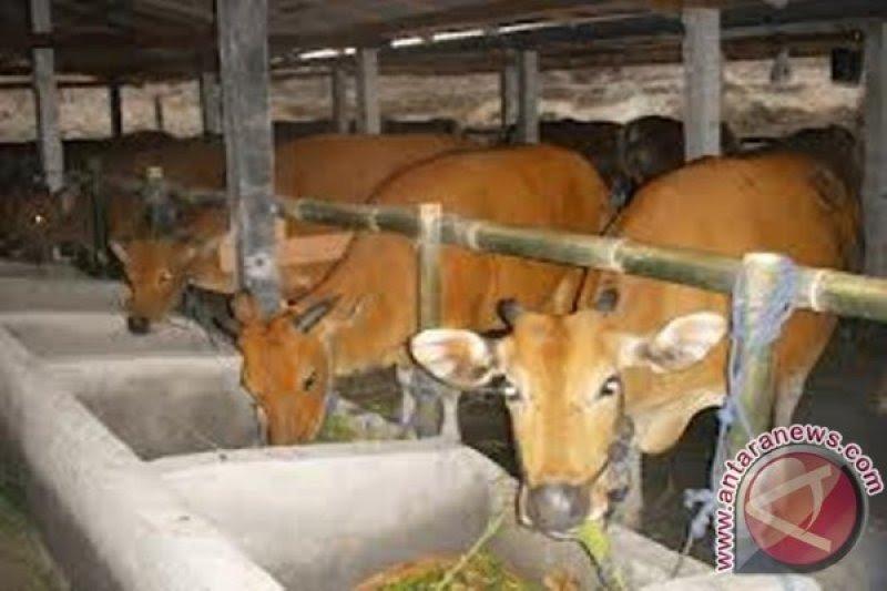 NTB tutup sementara seluruh pasar hewan mencegah penyebaran COVID-19