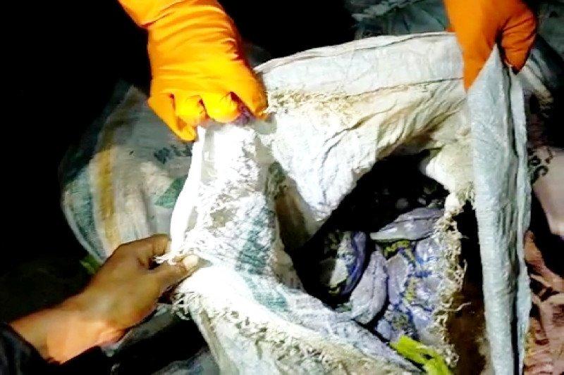 30 ular piton dalam karung temuan warga Sampit dilepasliarkan di Lamandau