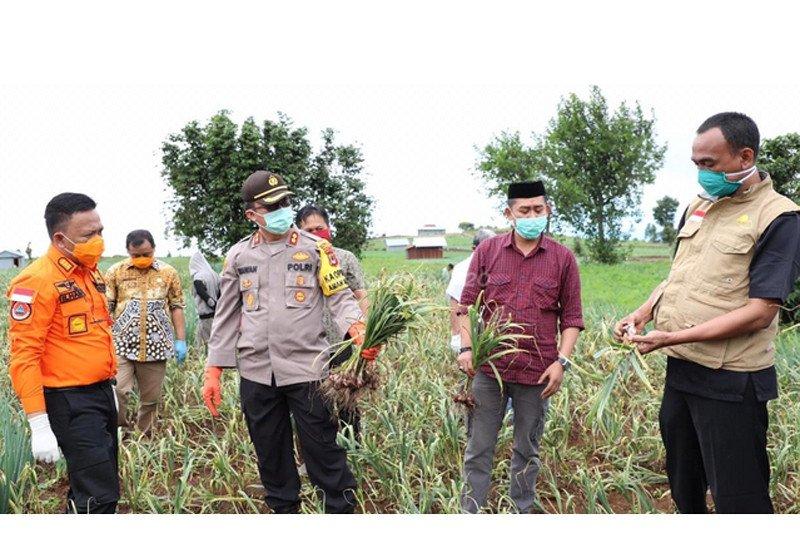 Bupati : Produksi pertanian Bantaeng tetap normal