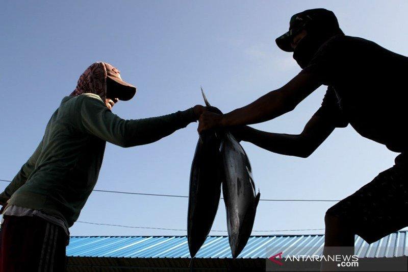 Harga ikan turun di Makassar
