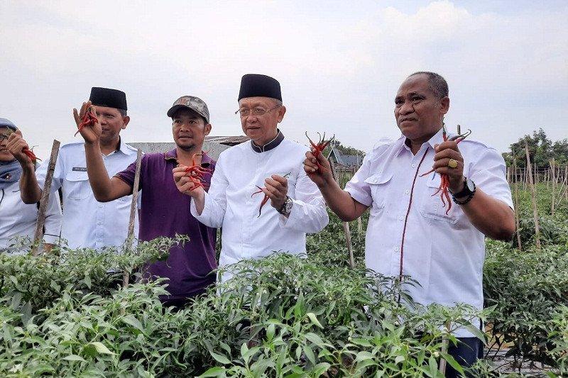 Petani Sarolangun Jambi panen cabai merah