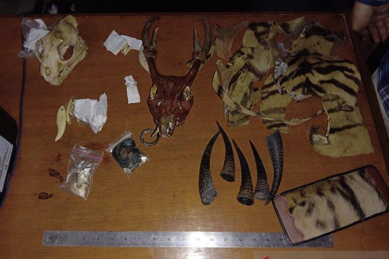 Pelaku perdagangan kulit harimau ditangkap di Jambi