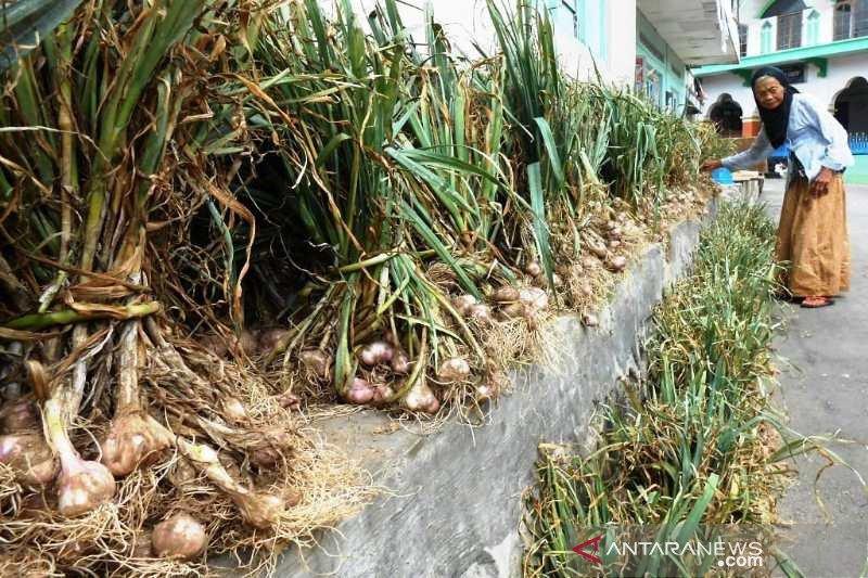 Program swasembada bawang putih Temanggung, Jateng