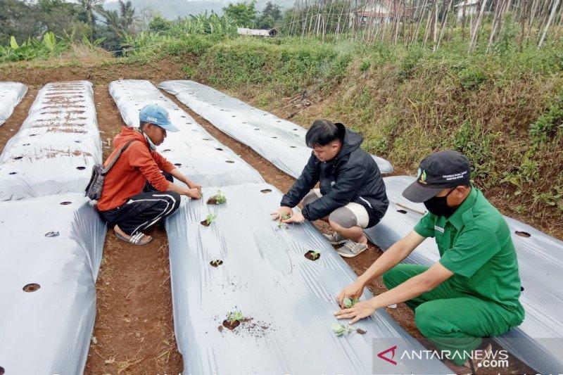 Mahasiswa Polbangtan ajak petani gunakan teknologi GAP saat pandemi
