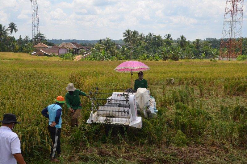 Penyuluh Lampung tetap dampingi petani panen saat pademi COVID-19