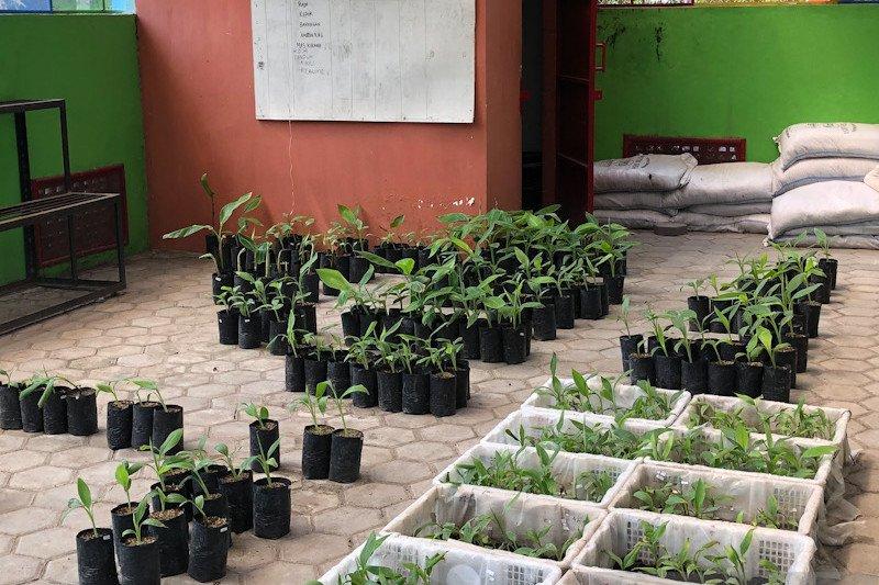 Rencana penataan Kebun Plasma Nutfah Pisang Kota Yogyakarta ditunda