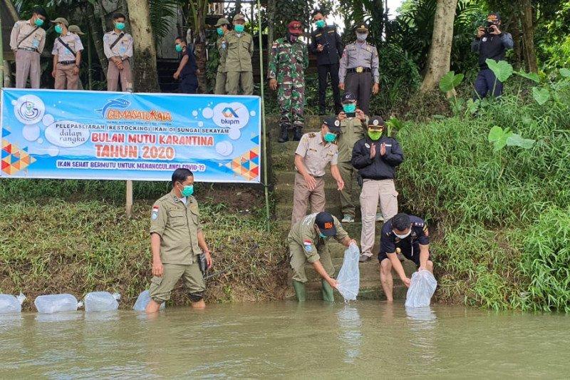 10.000 benih ikan baung ditebar Sungai Sekayam perbatasan RI-Malaysia