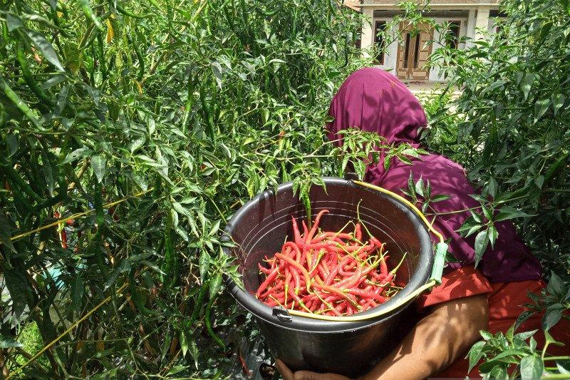 Jelang Lebaran, Harga cabai dan bawang merah mengalami kenaikan di Padang Panjang