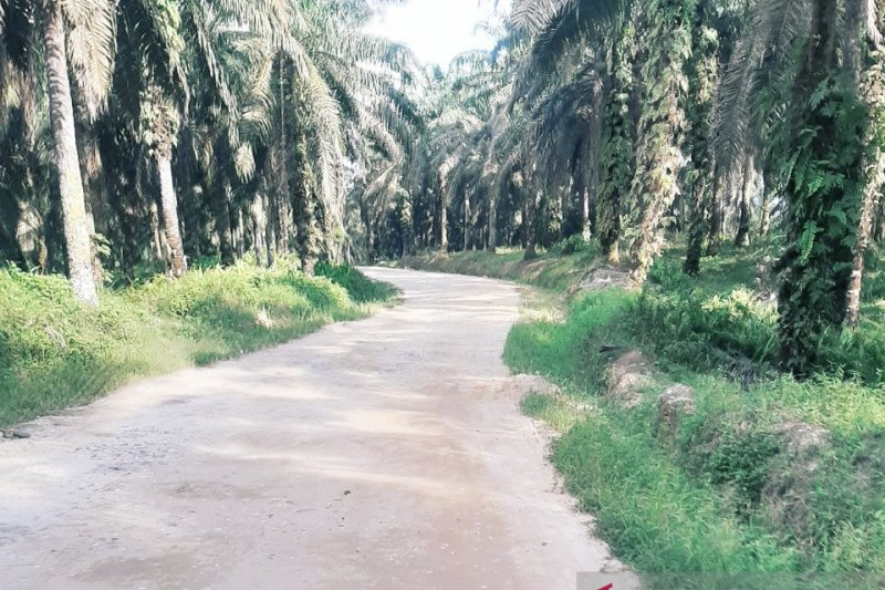 Memasuki new normal, harga sawit Riau naik