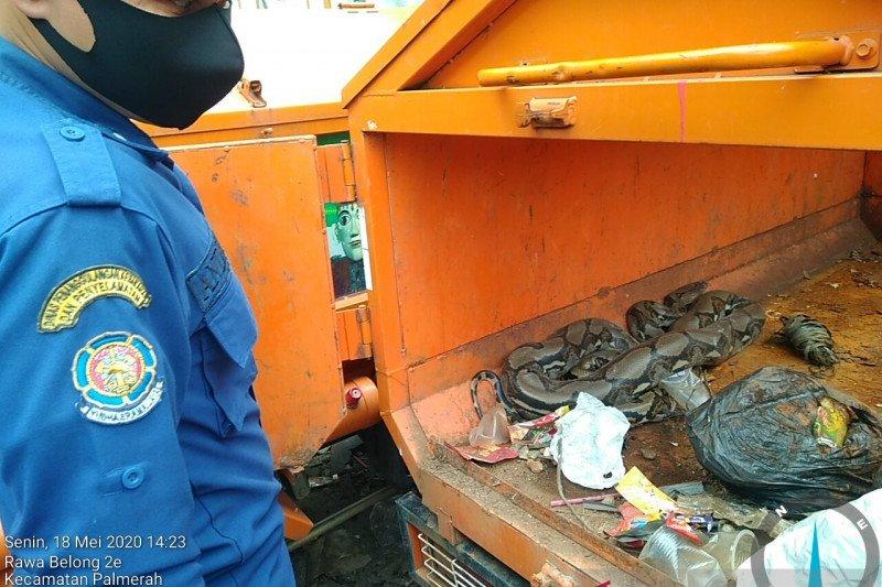 Ular sanca sepanjang tiga meter ditemukan dalam gerobak motor