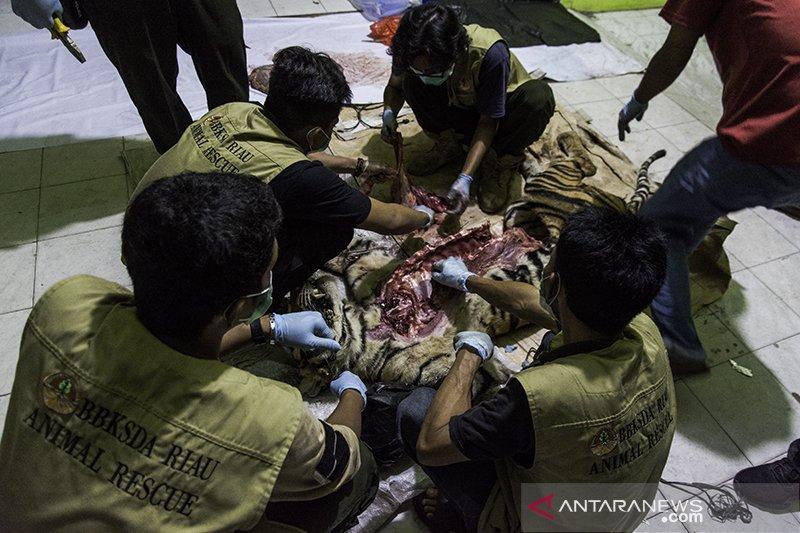 BBKSDA Riau periksa perusahaan HTI terkait  kematian harimau