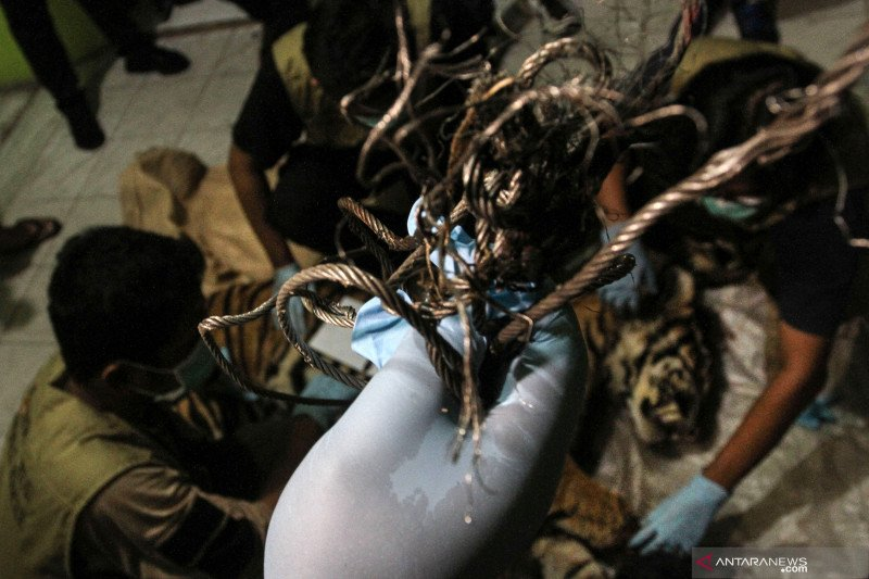 BBKSDA Riau terjunkan tim ke lokasi harimau terkam warga