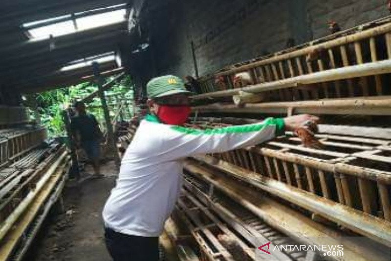 Stok pangan di Kulon Progo aman
